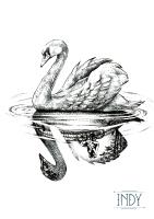 cygne swan lake lac reflet dot dots blask work artwork indy couple bike