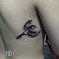 tattoo bird oiseau tatouage paris france indy tat art artwork indy_artwork tatouage black and grey shading feather